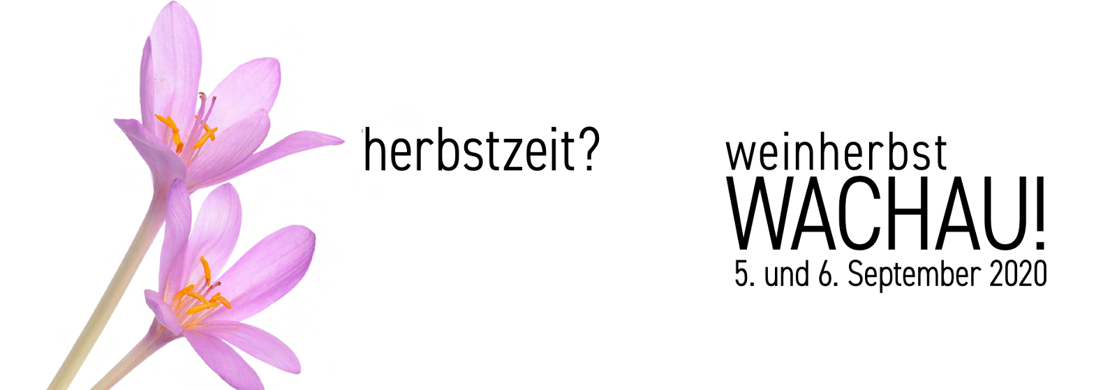 Weinherbst Wachau